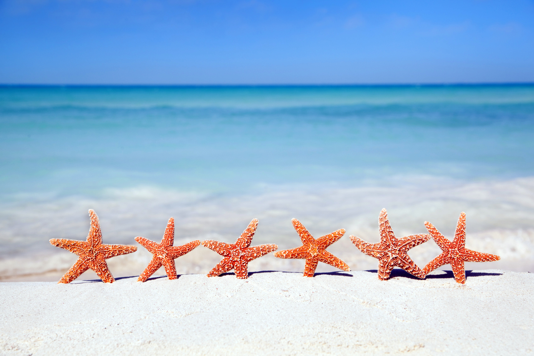 Starfish Wallpapers Images Photos Pictures Backgrounds HD Wallpapers Download Free Images Wallpaper [1000image.com]