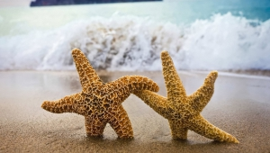 Starfish High Definition Wallpapers