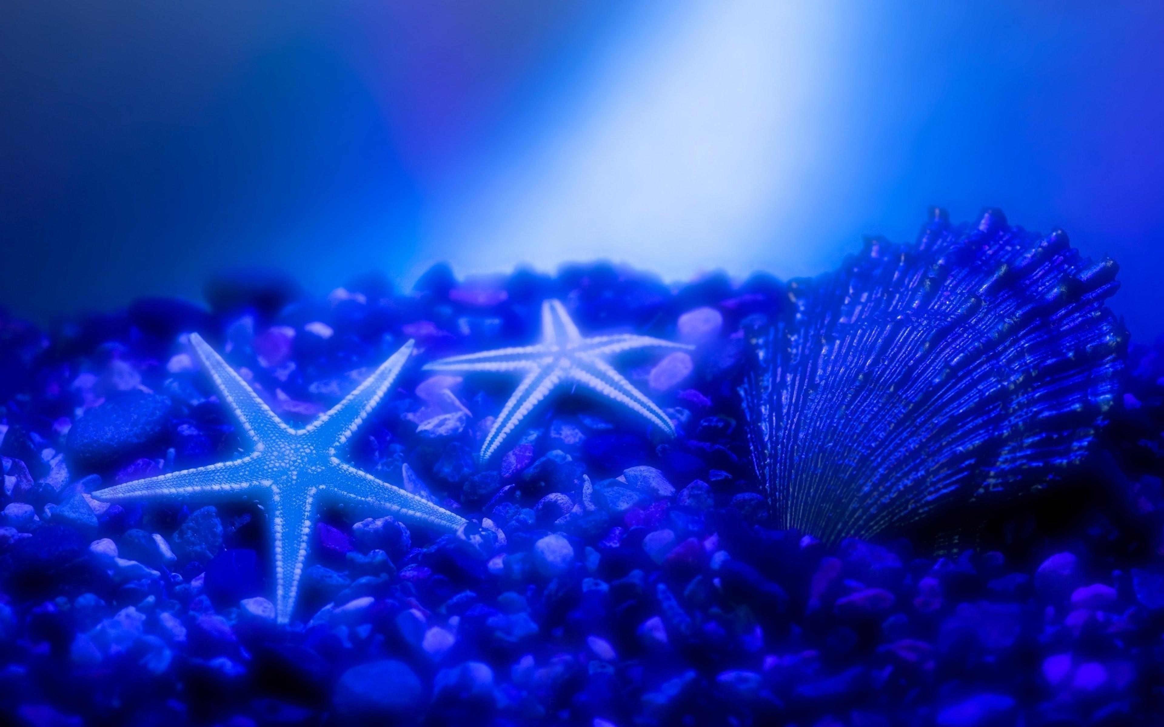 Starfish High Quality Wallpapers