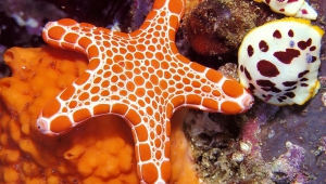 Starfish Pictures
