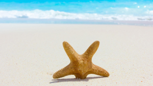 Starfish Wallpapers HD