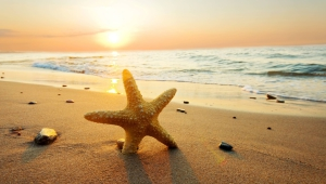 Starfish Widescreen