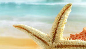 Starfish For Smartphone