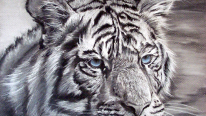 White Tiger High Quality Wallpapers For Iphone