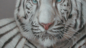 White Tiger For Smartphone