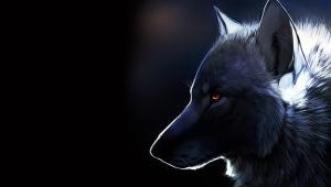 Wolf 4K
