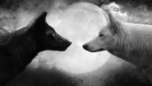 Wolf Widescreen