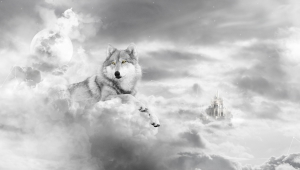 Wolf Background