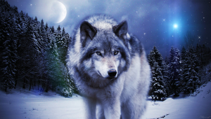 Wolf Hd Wallpaper