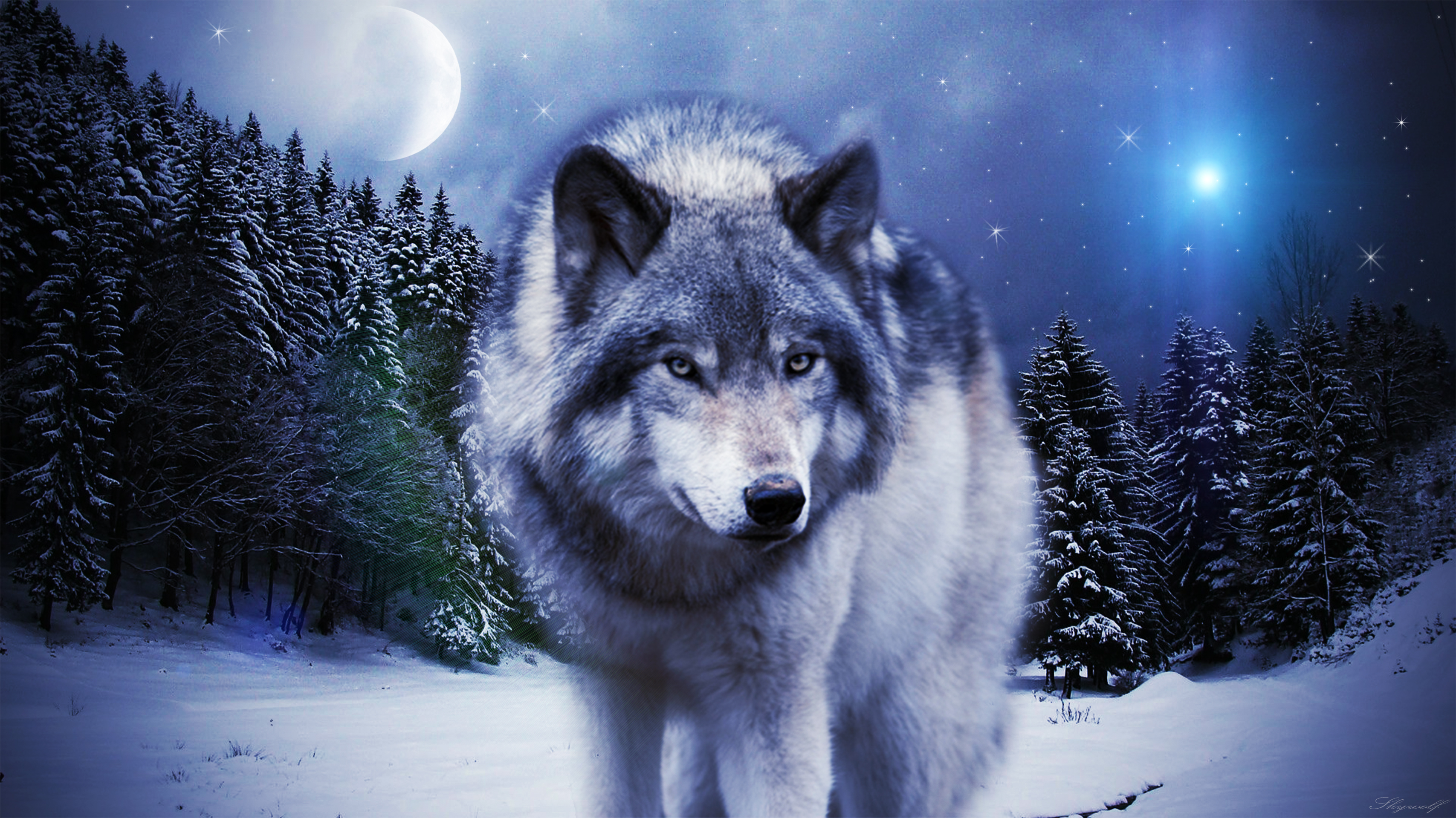 Hd wallpaper wolf - Wolf Hd Wallpaper