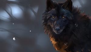 Wolf Image Hd