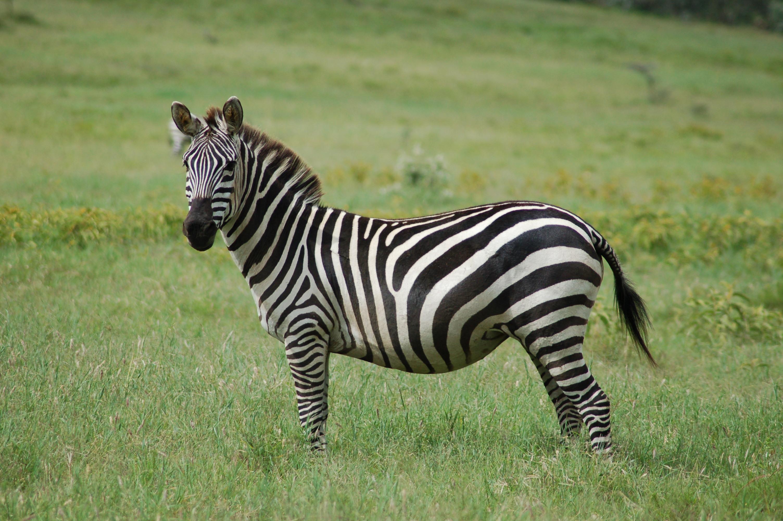 the background of the zebra Zebra_datepicker is a super-lightweight, highly configurable, cross-browser date picker jquery plugin.