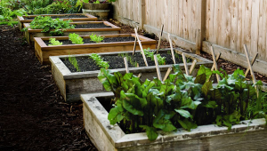 How To Make Raised Garden Beds