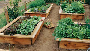 Raised Beds Garden