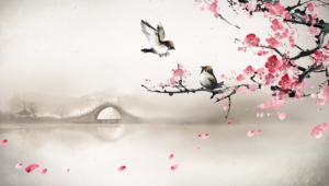 Sakura Backgrounds