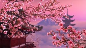 Sakura Images