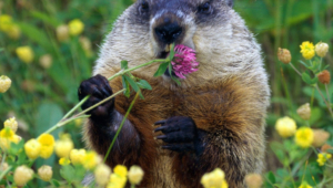 Beaver Photos
