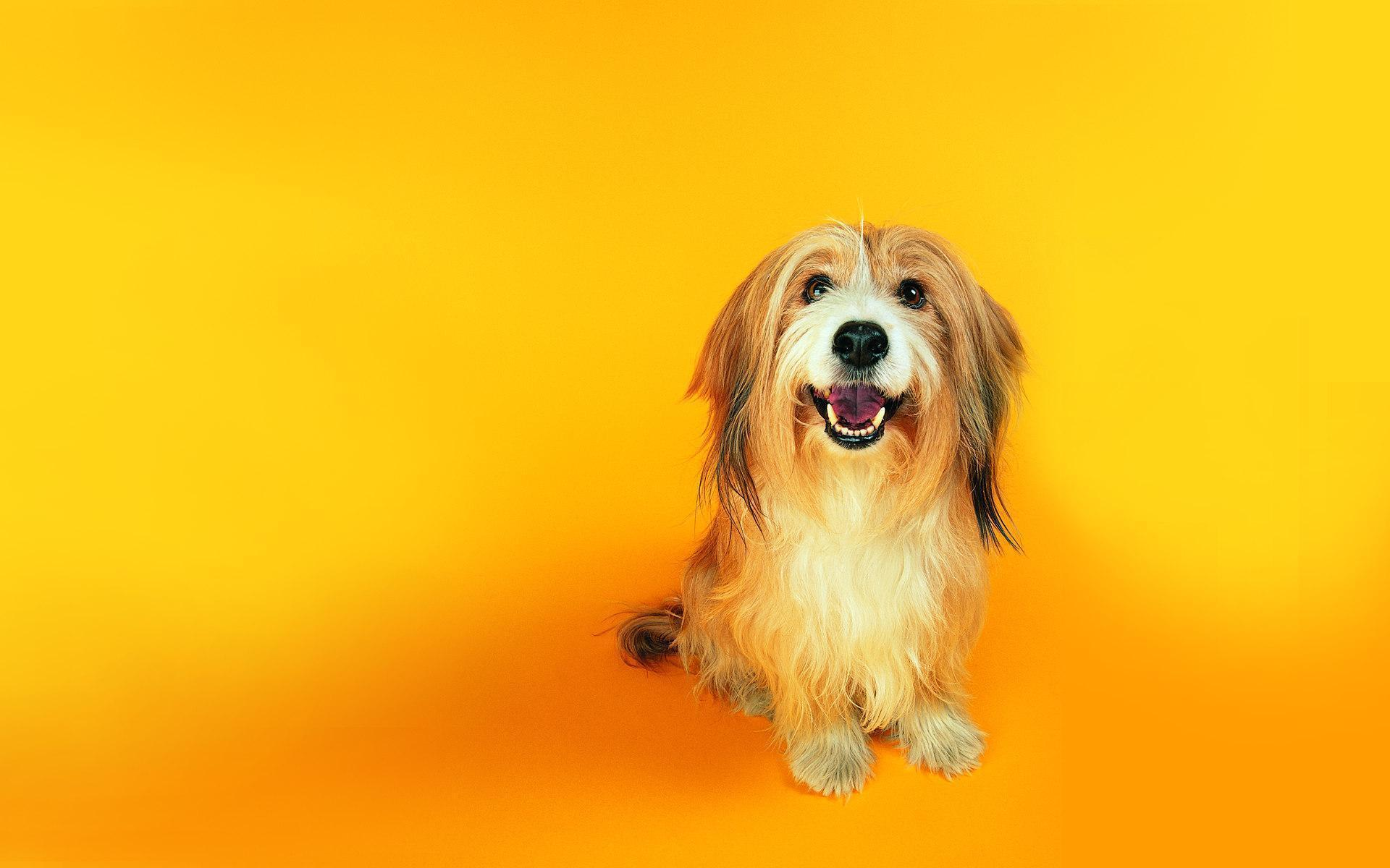 funny dogs wallpapers images photos pictures backgrounds