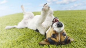Funny Dog Backgrounds 4 Desktop Wallpaper