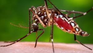 Zika Virus Wallpapers