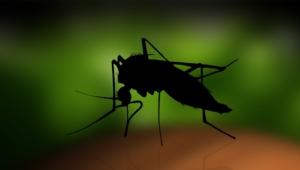 Zika Virus Wallpapers HD