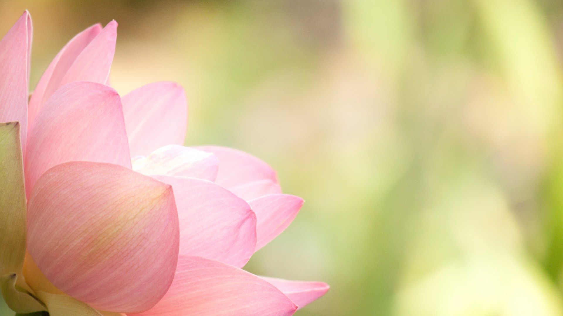 Lotus Flower Wallpapers Images Photos Pictures Backgrounds