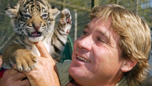 Steve Irwin Wallpapers