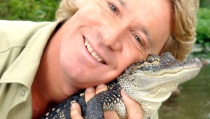 Steve Irwin Wallpapers Hd