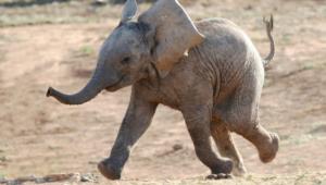 Elephant Desktop Images