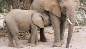Elephant Full Hd