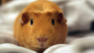 Hamster Wallpapers Hq