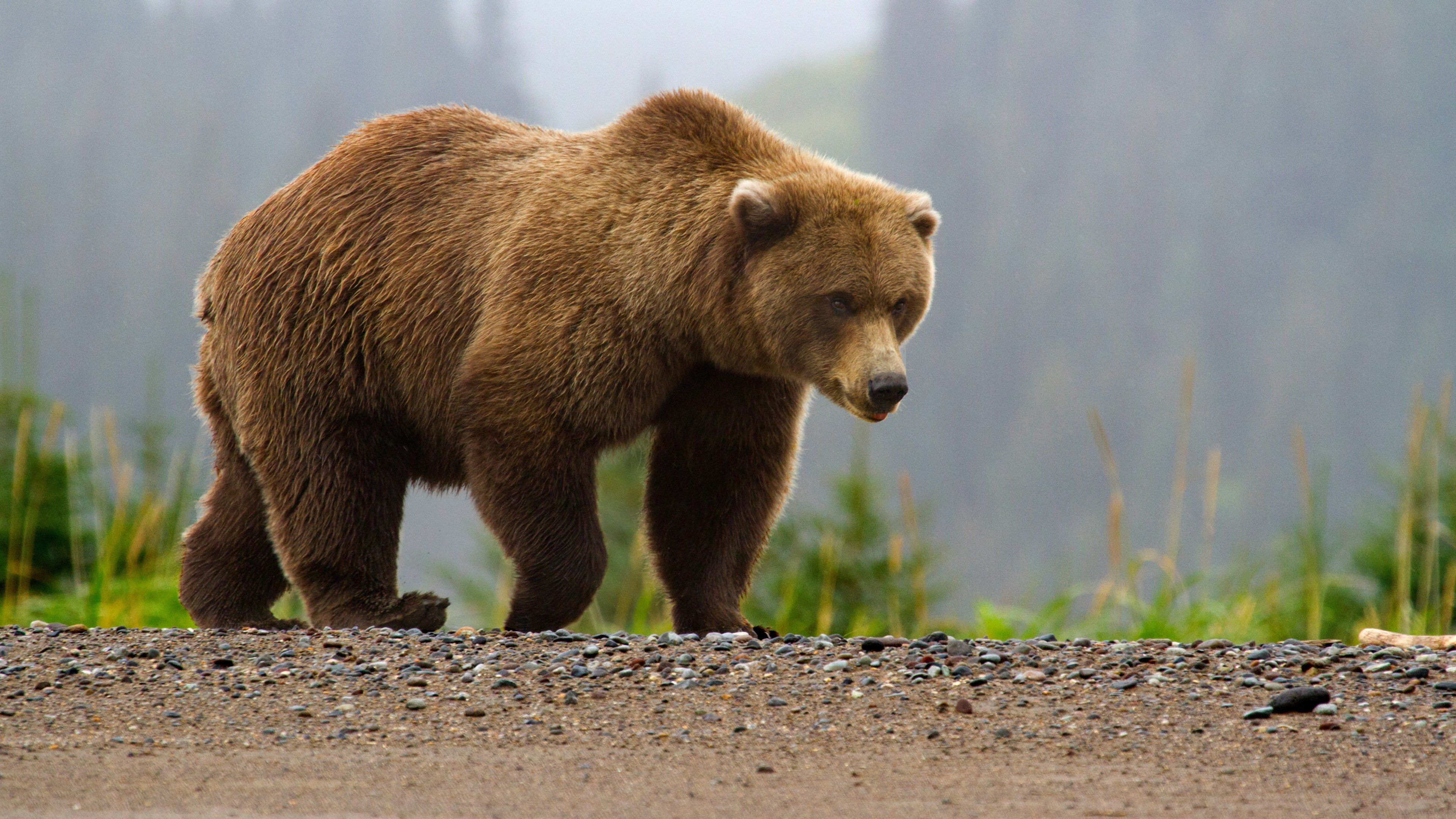 Pictures Of Bear