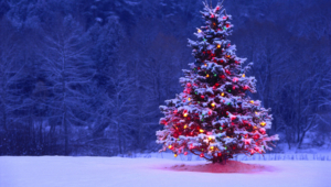 Christmas Tree Widescreen
