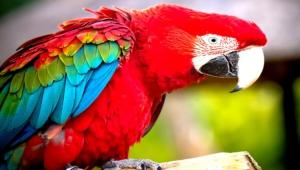 Macaw 4k