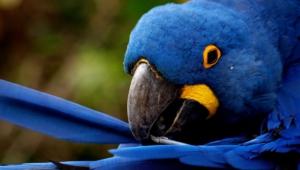 Macaw Hd Desktop