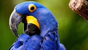 Macaw Wallpapers Hd