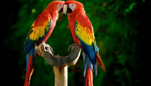 Macaw Wallpapers Hq