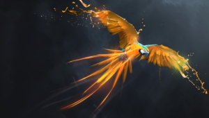 Macaw Full Hd
