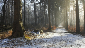 Pictures Of Winter Forest
