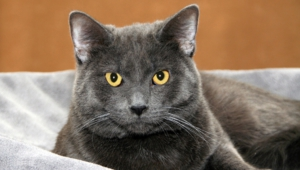 Russian Blue Background