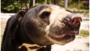 Sun Bear High Definition Wallpapers