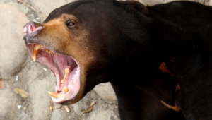 Sun Bear High Quality Wallpapers