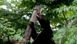 Sun Bear Wallpapers
