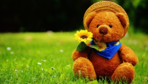 Teddy Bear Hd Wallpaper