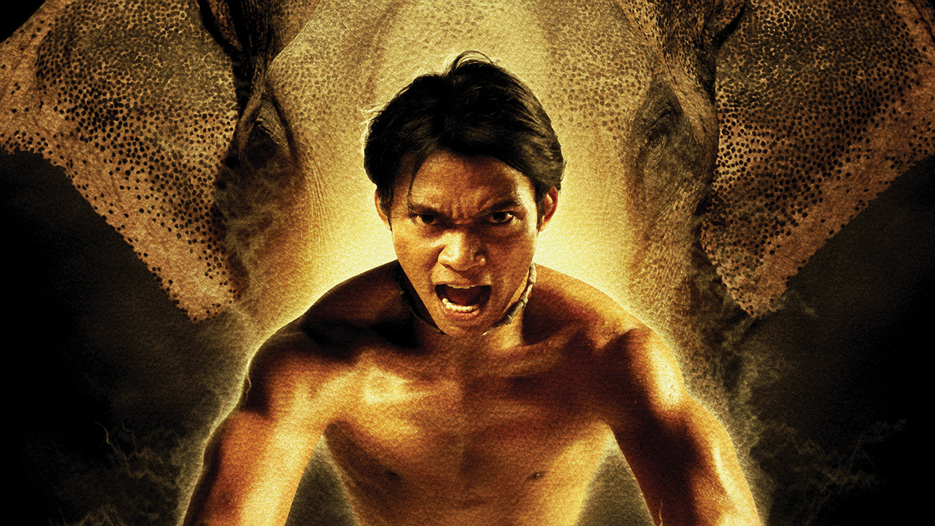 Jaa Good tony jaa wallpapers images photos pictures backgrounds