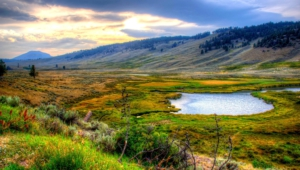 Yellowstone National Park Hd Background