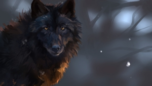 Black Wolf Photos