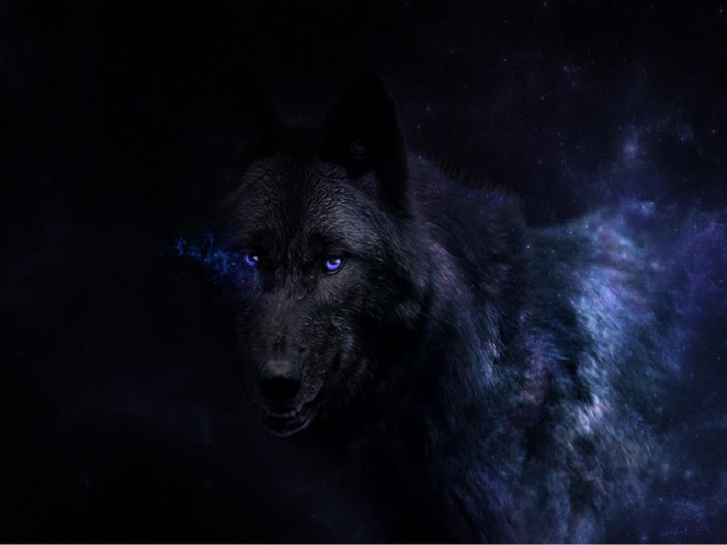 wolf in black and - photo #20