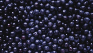 Blueberries Computer Wallpaper