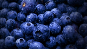 Blueberries Pictures
